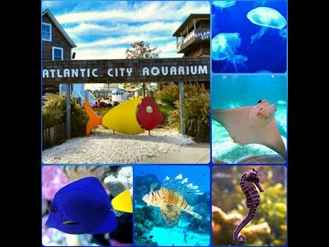 Atlantic City Aquarium | Awesome place for Kids and lots of fun.