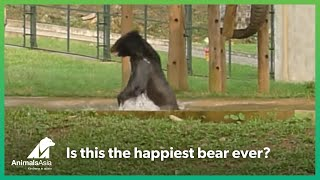 Is this the happiest bear ever?