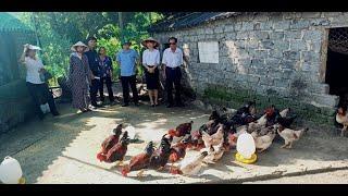 Tổng kết mô hình nuôi gà ri thuần