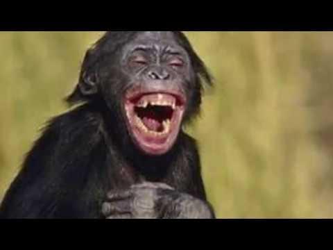 اضحك  funny pictures