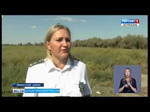 В Астраханской области Управлением Россельхознадзора выявлен очаг произрастания повилики полевой