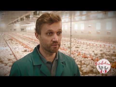 Die Haltung - Mastdauer Huhn