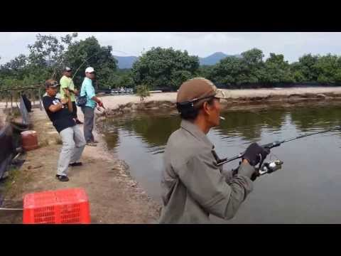Tiger 5 – Saltwater Game Fishing 11th Jan 2014