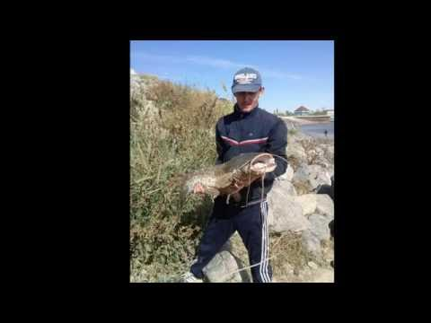 караозек рыбалка видео