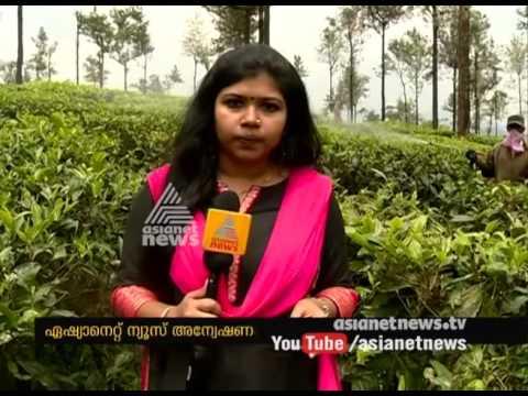 Pesticides using tea plantation | Asianet News Investion
