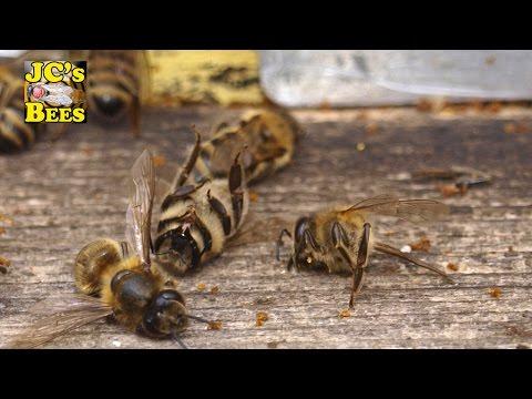 Dead bee hive
