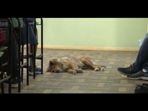 Cachorro adota escola em Uruguaiana e tem tratamento pago por alunos - RS