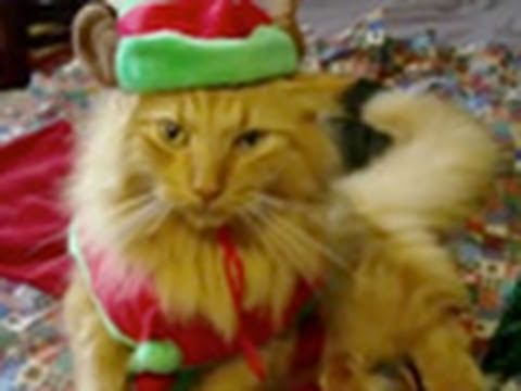 "Animals of YouTube sing ""Jingle Bells"""