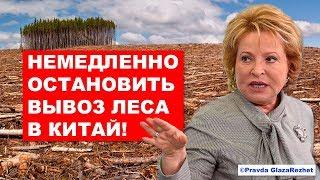 Вывоз леса в Китай будет запрещён (не опять, а снова) | Pravda GlazaRezhet