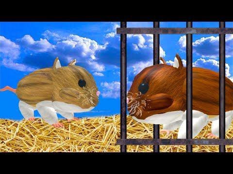СИМУЛЯТОР квадратной МЫШИ хомячка и симулятор КОТА других питомцев в ROBLOX побег мульт игра КИДА