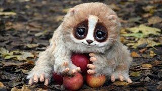 Video 8 Cute Animals That Can Kill You MP3, 3GP, MP4, WEBM, AVI, FLV Juli 2018