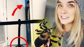 Video GIANT SPIDER PRANK! - Lenay MP3, 3GP, MP4, WEBM, AVI, FLV Juli 2018