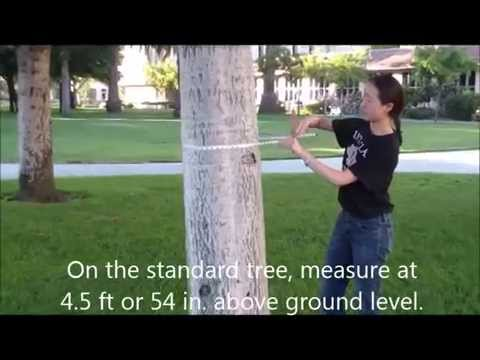 Diameter at breast height (DBH) tutorial