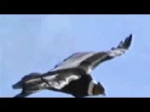 Condor Pasa...(Varios Idiomas)