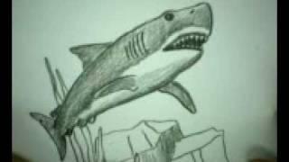 Видео: как нарисовать белую акулу карандашом