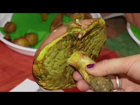TVS: Nivnice - Výstava hub