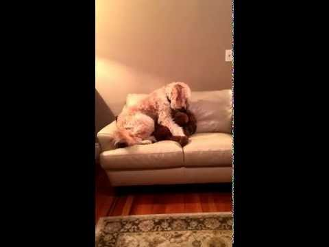 Dog Snuggles With Best Dog Friend Having A Bad Dream [VIDEO]