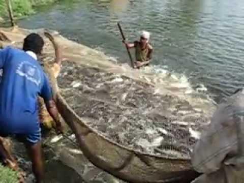 ютуб рыбалка в индии