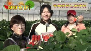 「田人観光いちご園」さんの「いちご」 サンシャインTV