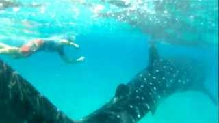 Tofo Mozambique  city photo : Swimming With Whale Sharks in Mozambique