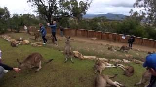 Brighton (TAS) Australia  city photos : A Visit to Bonorong Wildlife Sanctuary, Tasmania