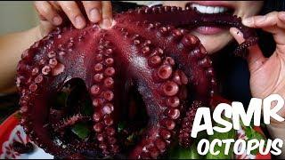 Video ASMR GIANT OCTOPUS ปลาหมึกยักษ์ (CHEWY EATING SOUNDS) No Talking | SAS-ASMR MP3, 3GP, MP4, WEBM, AVI, FLV Juni 2018