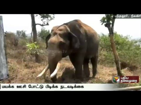 Nilgiri-forest-officials-attempt-to-catch-elephant-in-Pandalur