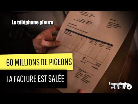 60 millions de Pigeons : le téléphone pleure