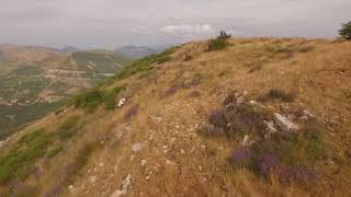 Florihana wild Lavender 2016