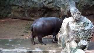 Bangkok Zoo Thailand 2009