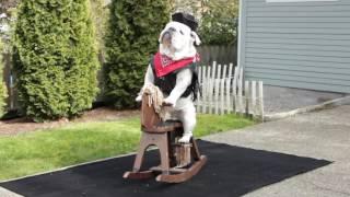 animale bulldog pe cal de jucarie