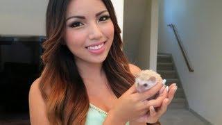 Meet my pet Hedgehog Poki !!! - YouTube