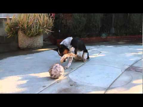 Brilliant Trained Dog