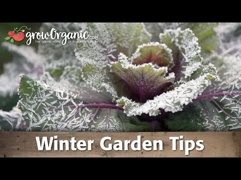 Garden tips - Tricia shares her winter gardening tips to get your garden ready for cold weather. WInterize your tools, equipment and plants. Do simple tasks in the fall to...