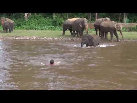 Mies joessa, norsu rientää apuun