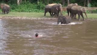 Słoń rusza na pomoc człowiekowi