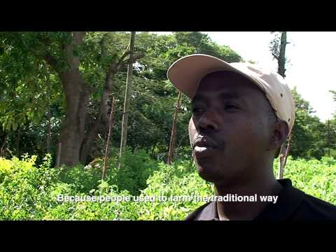 Commercialization of Smallholder Farmers in Tanzania