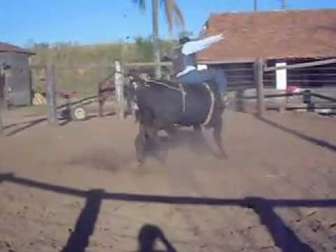Treino em touros em guaxupé