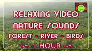Nature sounds for relaxing - forest sound - river sound - birds sounds - 1 Hour