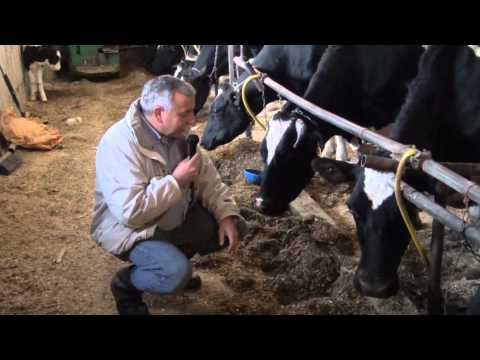 Chenango Dairy Cow Comfort 1: Tie Stall Barns