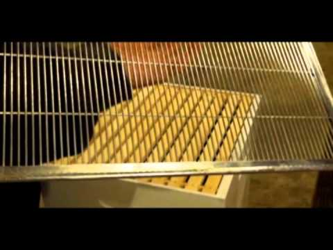 New-Bee 101: Stacking The Basic Components Of A Langstroth Bee Hive