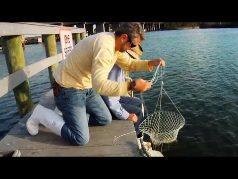 Crab - http://howtodoflorida.com Commercial crabber Capt. Gus shows Chad a few techniques for recreational crabbing off a dock or boat.