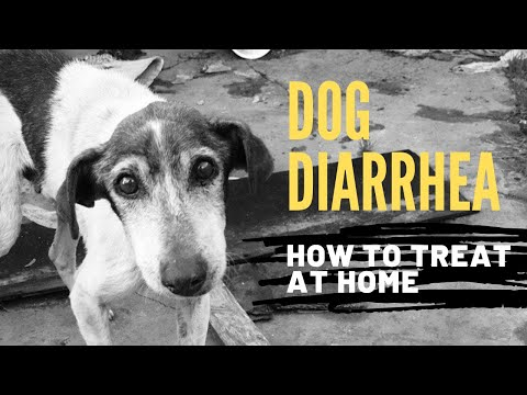 Diarrhea in Dogs: How To Quickly Treat At Home
