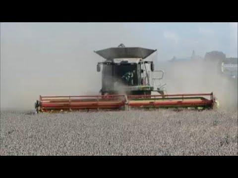 Γερμανία: Τις σοδειές καταστρέφει η παρατεταμένη ξηρασία…