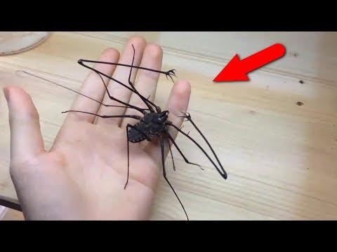 Самые странные и жуткие насекомые. С ними лучше не встречаться! (видео)
