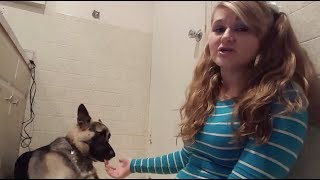 Video MEET THE YOUTUBER THAT HAS S*X WITH HER DOGS download in MP3, 3GP, MP4, WEBM, AVI, FLV January 2017