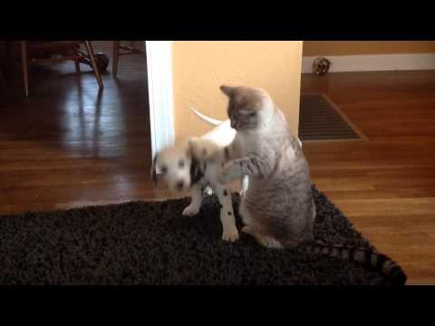 cucciolo-di-dalmata-ed-il-suo-fratellino-felino