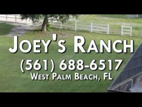 Horseback Riding Service, Horseback Riding Lessons in West Palm Beach FL 33415