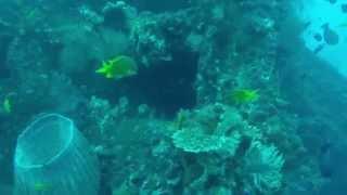USAT Liberty - Tulamben - Sea life