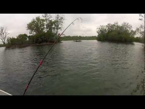 Giant Illinois Smallmouth Bass